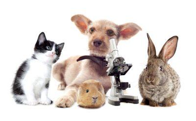 We zijn een dierenartsenpraktijk voor gezelschapsdieren in de brede zin.
